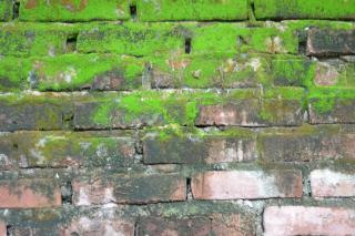 brick-and-moss-wall-texture-green_19-140299